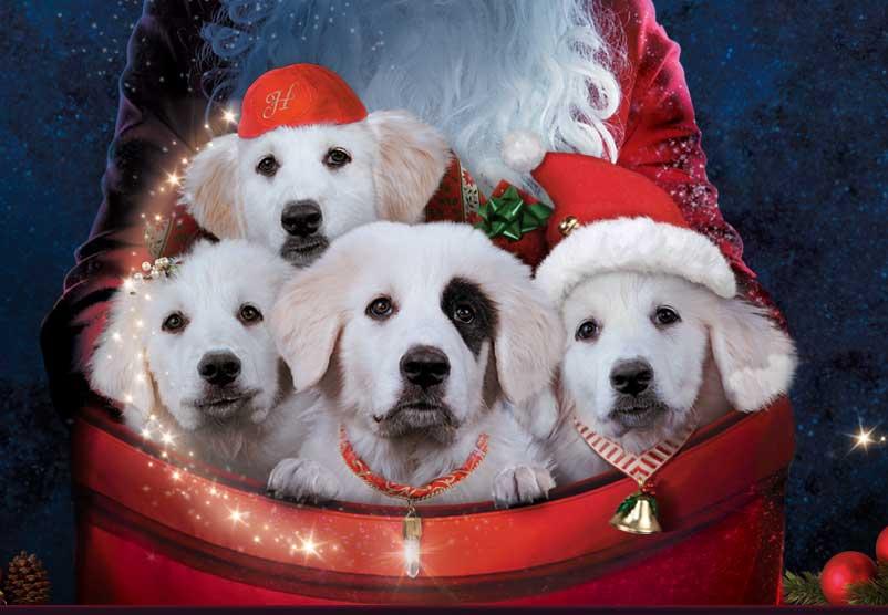 santa paws 2 meet the pups